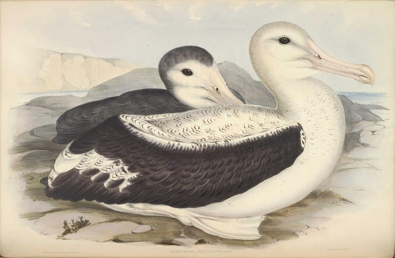 Samuel taylor coleridges the rime of the ancient marinerthe titlewandering albatross authorcreatorjohn gould h c richter held bybritish library shelfmarkx841 volume 7 plate 38 copyright the british biocorpaavc Images